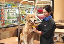 Best Guidance About Pet Care At PetSmart